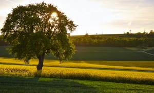 Saarland__DSCF9328_web